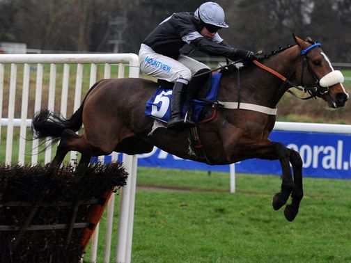 Hollow Tree: Can win the Coral Cup