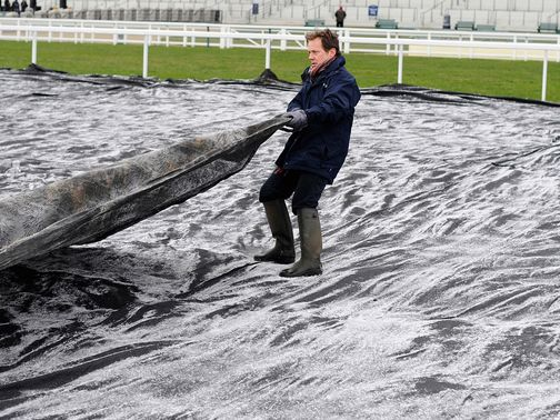 Frost covers: Have been employed at Ascot