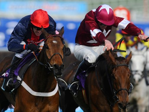 Bobs Worth (left): Set to take his chance in the Hennessy