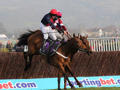Bobs Worth: Gold Cup horse?
