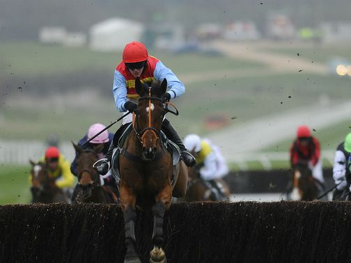 Hunt Ball: Worth backing at Cheltenham