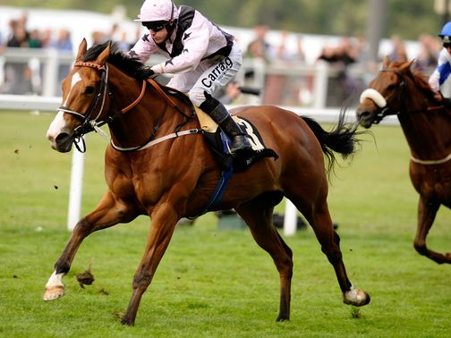 Hoof It: A live player in the July Cup on the pick of his form