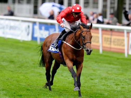 Mayson: Looks to cap a tremendous season at Longchamp