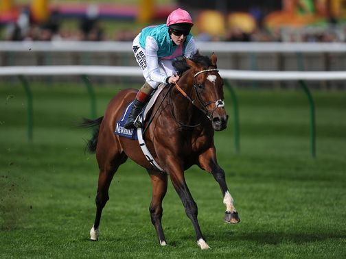 Frankel: Set to gallop at Newmarket