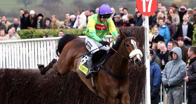 Kauto Star: Will be back at his beloved Cheltenham
