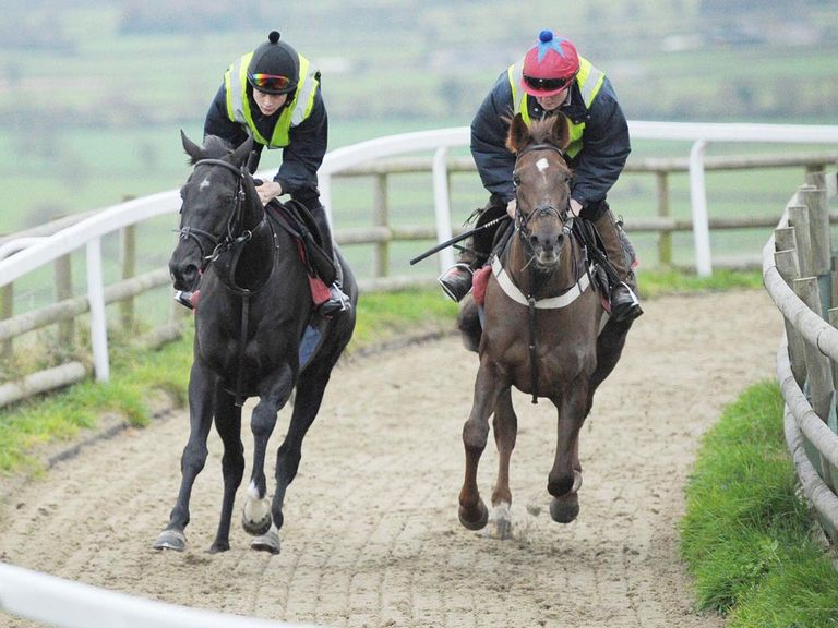 Sanctuaire (left): Works at Paul Nicholls' yard on Wednesday