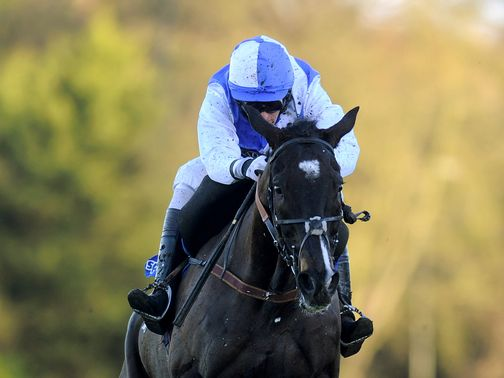 Bold Sir Brian: Gold Cup entry