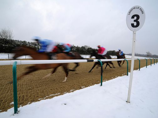 Lingfield: Inspection called for Saturday