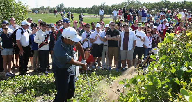 Tiger Woods: Hacks out at the fifth hole having driven into undergrowth