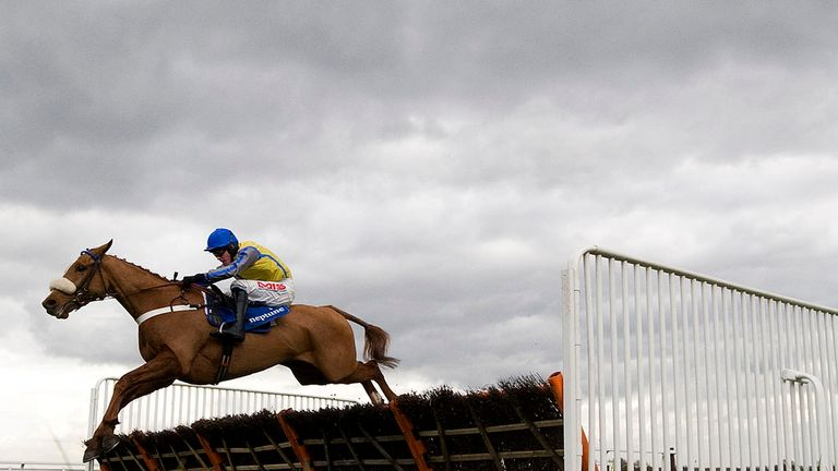 Up And Go will miss the Cheltenham Festival