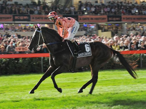 Crowds pack the track at Moonee Valley to see Black Caviar win again