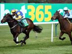 Punchestown Day Four & Sandown