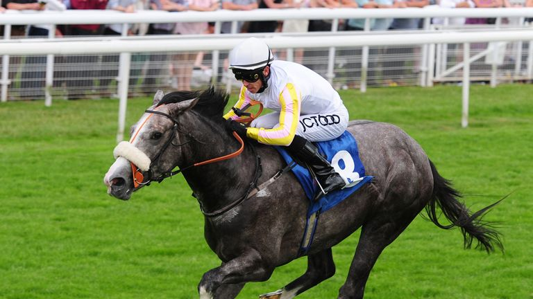Grey's day: The Grey Gatsby can win the Champagne Stakes, says Alex