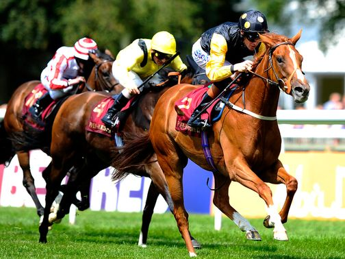 Indignant is fancied to claim the finale at York