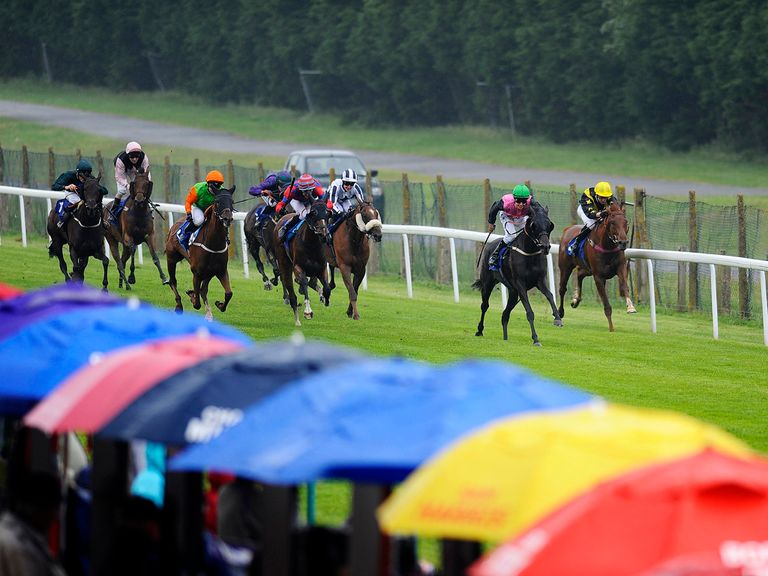 Brighton: Host a seven race card on Sunday