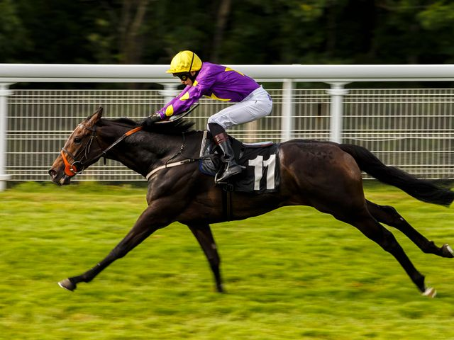 Highland Duke: On target in the finale at Goodwood