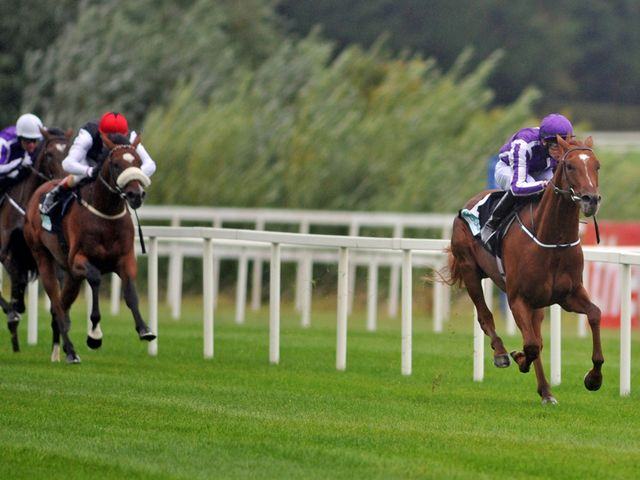 Australia: Far too good for Leopardstown rivals