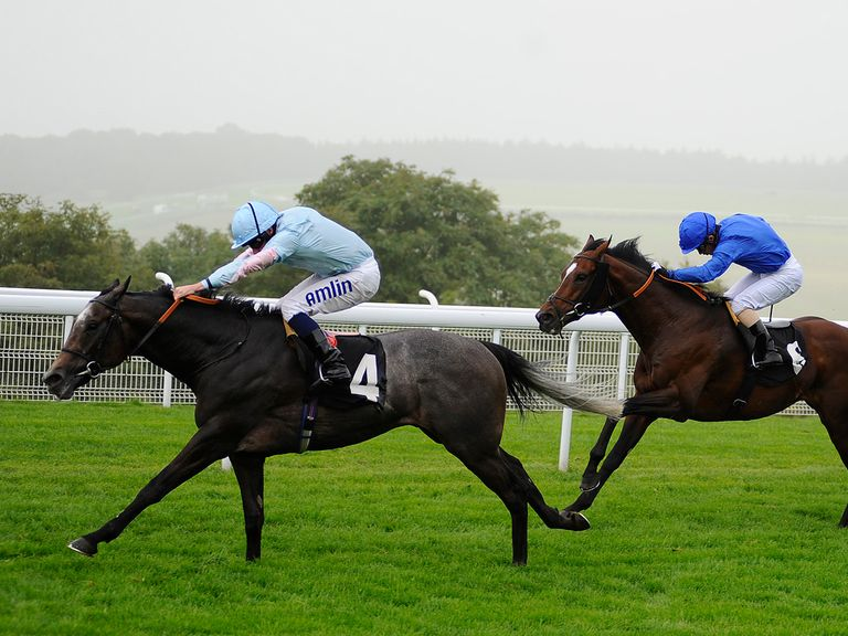 Grandeur: Favourite for the Winter Derby