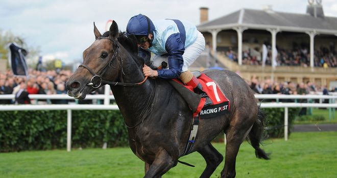 Kingston Hill: A live Classic contender?