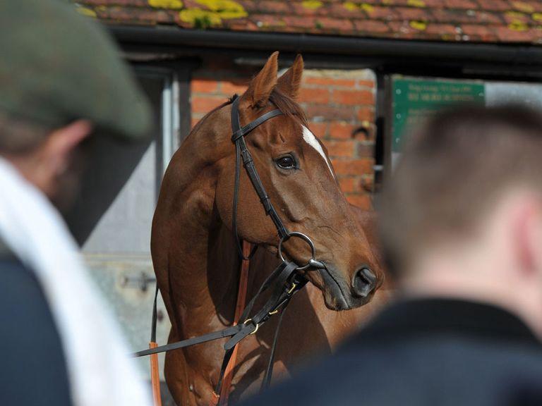 Silviniaco Conti: Set for Kempton gallop