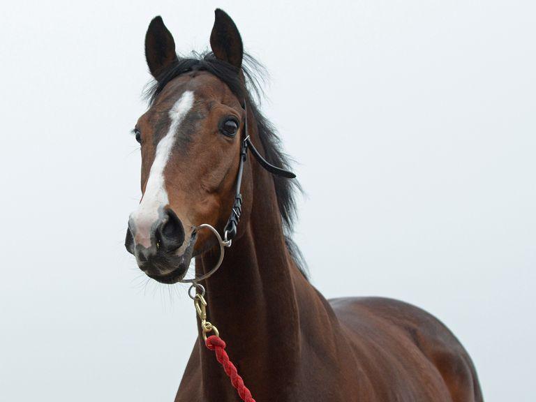 Sir Reginald: Will things drop right for him at Haydock? (copyright Sal Smithson: www.richardfahey.com)