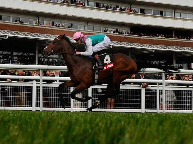 Kingman: In good order ahead of the Irish 2,000 Guineas.