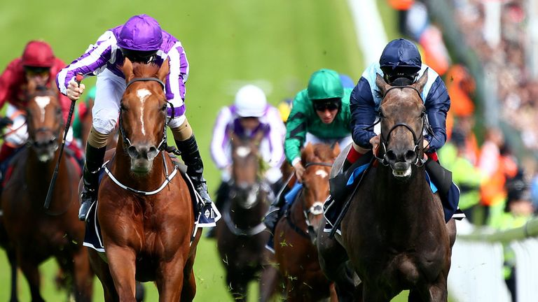 Kingston Hill (right): Will be given two entries at York