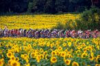 Tour de France stage 19 gallery