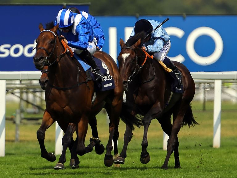 Taghrooda: Now as short as 3/1 for the Arc at Longchamp
