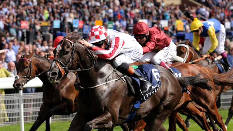 Shea Shea (right, blue and yellow silks) bows out behind Sole Power in Friday's Nunthorpe Stakes.