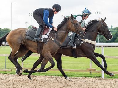 Horses work on the new Tapeta surface at Wolverhampton.