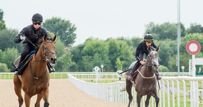 Horses pass the winning post during trials of the new Tapeta surface at Wolverhampton
