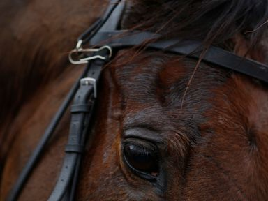 Un De Sceaux: A second Grade one winner for sire Denham Red, who died last year.