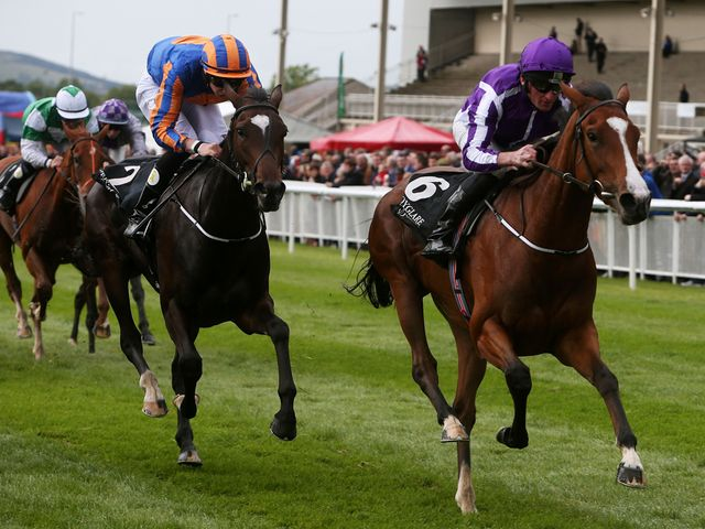 Minding is set to run in the Fillies' Mile
