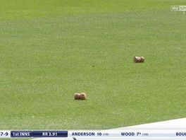 Corks on the outfield during the first Test between England and New Zealand at Lord's in 2015