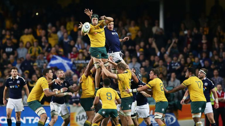 Adam Coleman of the Wallabies jumps at the lineout during the International Test match between the Australia and Scotland