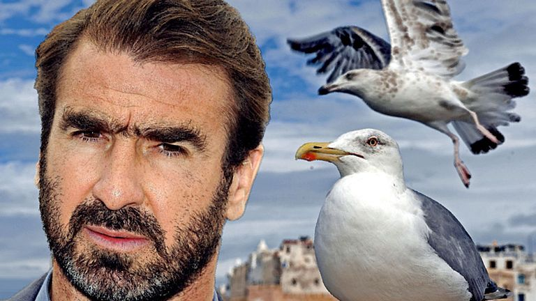 When the seagulls follow the trawler, it is because they think sardines will be thrown into the sea