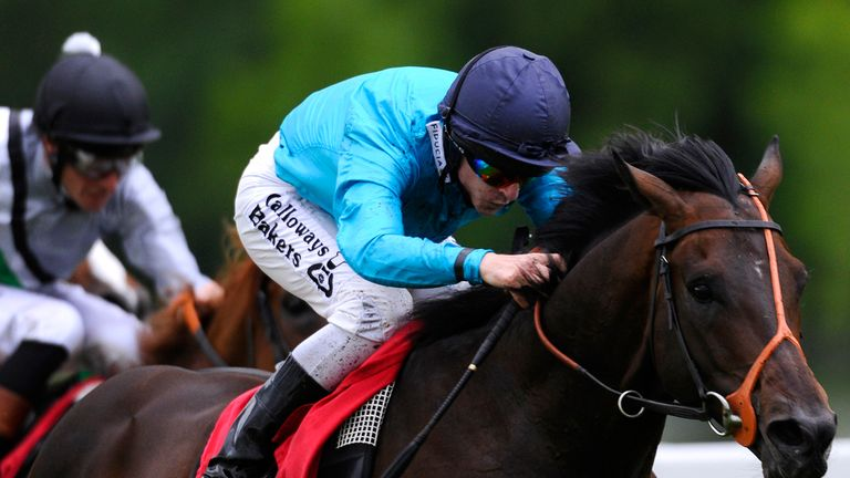 Brown Panther was fatally injured at the Curragh