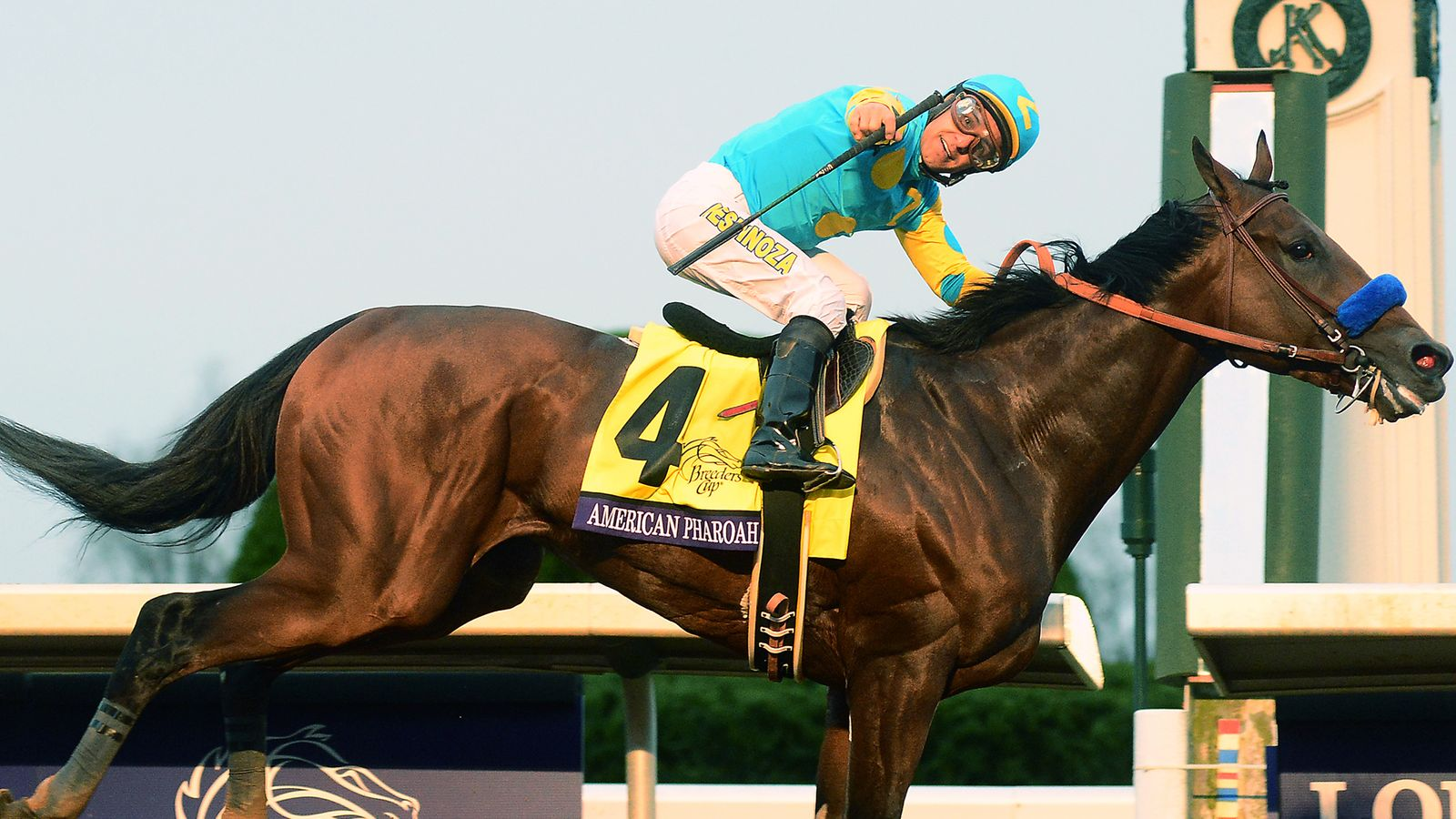 American Pharoah Has Been Named World S Best Racehorse For 2015 Racing News Sky Sports