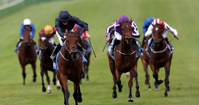 Rhododendron leads home stablemate Hydrangea