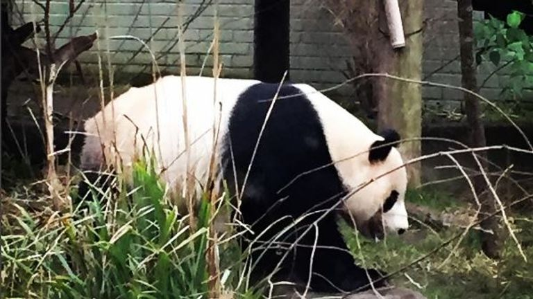 A panda bear was the star attraction for Jessica at Edinburgh zoo