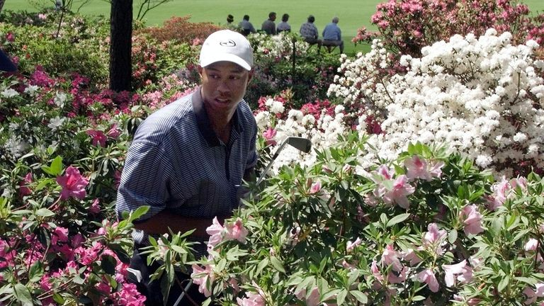 Woods searches for his ball in the azaleas as he racked up a triple-bogey eight in 1999