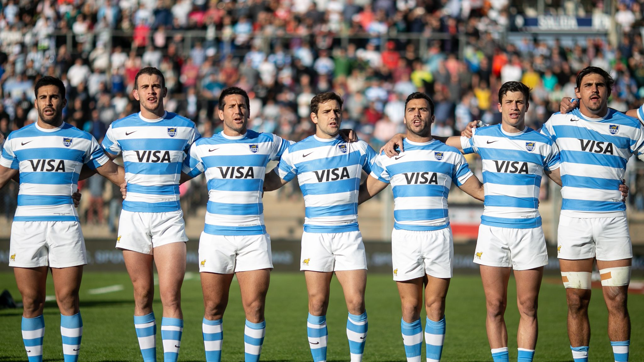 pumas rugby