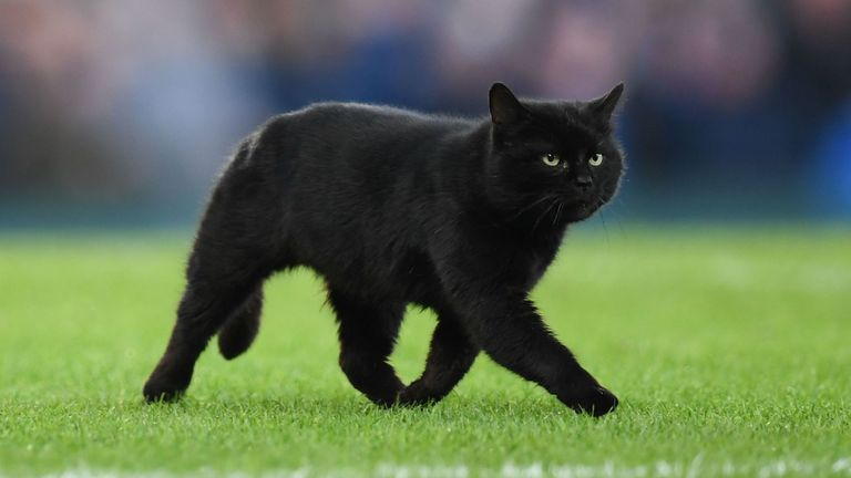 A black cat runs across the pitch and stops play at Goodison Park