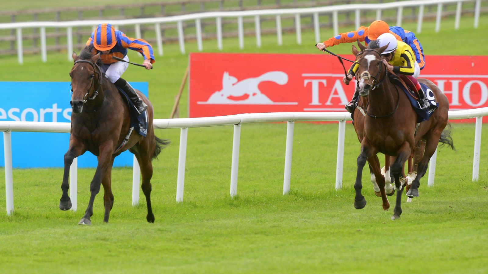 Coronation stakes betting trends aiding and abetting a fugitive punishment synonym