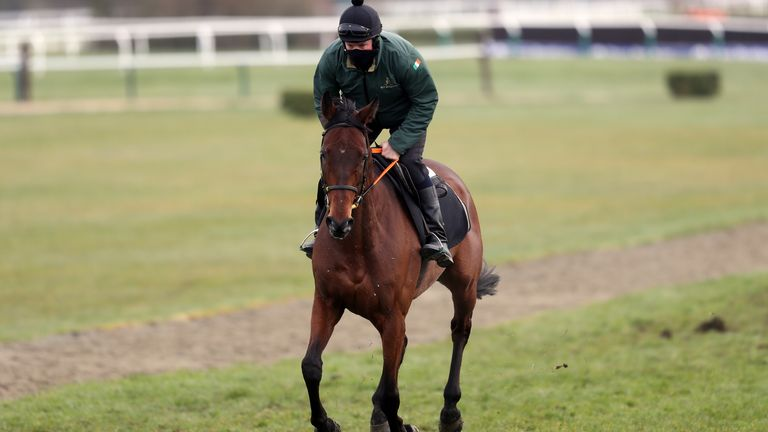 Chacun Pour Soi on the gallops ahead of day two of the Cheltenham Festival at Cheltenham Racecourse. Picture date: Wednesday March 17, 2021.