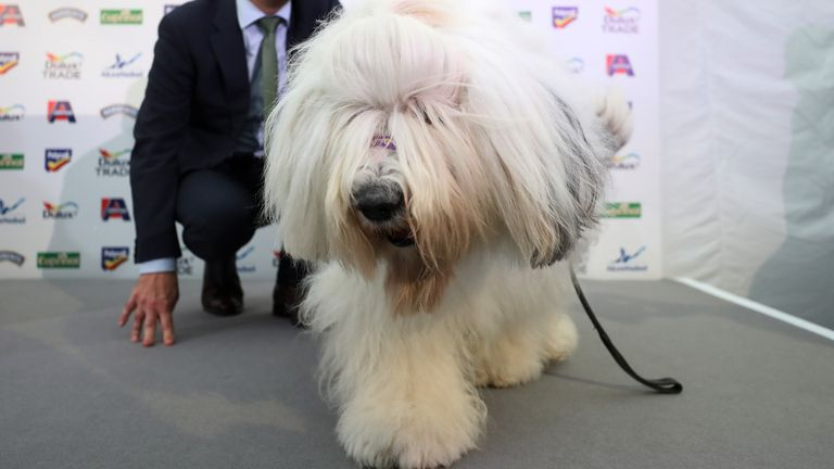 The Dulux dog was the centre of controversy surrounding Tottenham (getty)