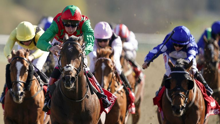 Lingfield winner Diligent Harry could line-up in the Commonwealth Cup