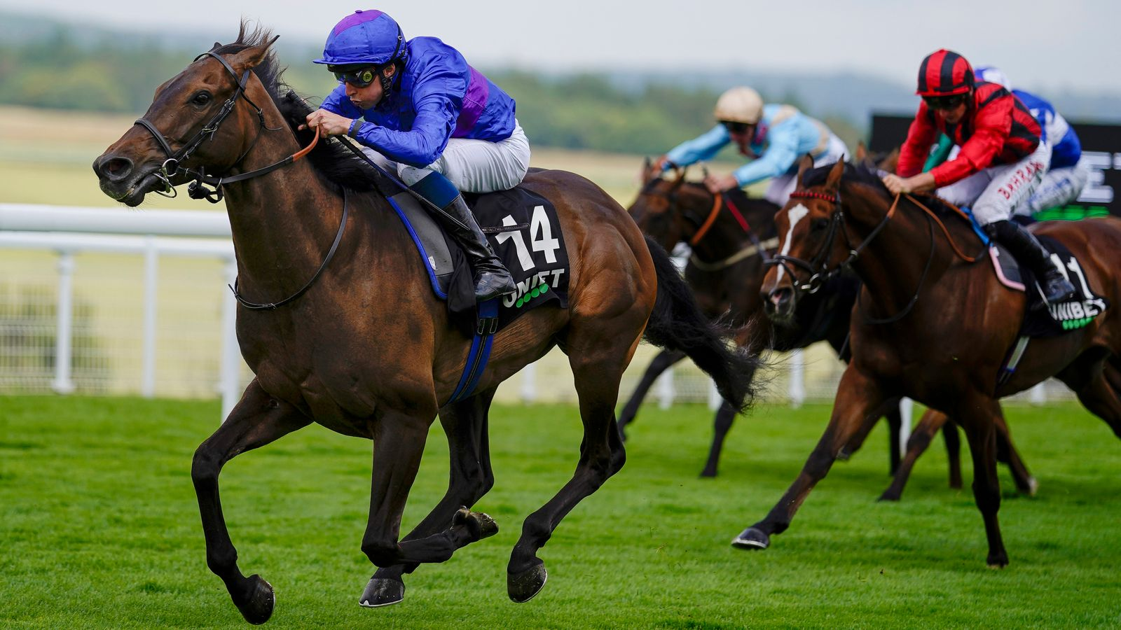 Migration bids for Foundation glory at Goodwood