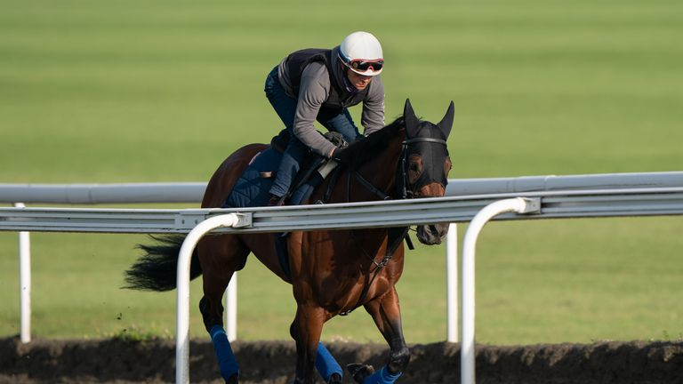 Mishriff works on the gallops in Newmarket